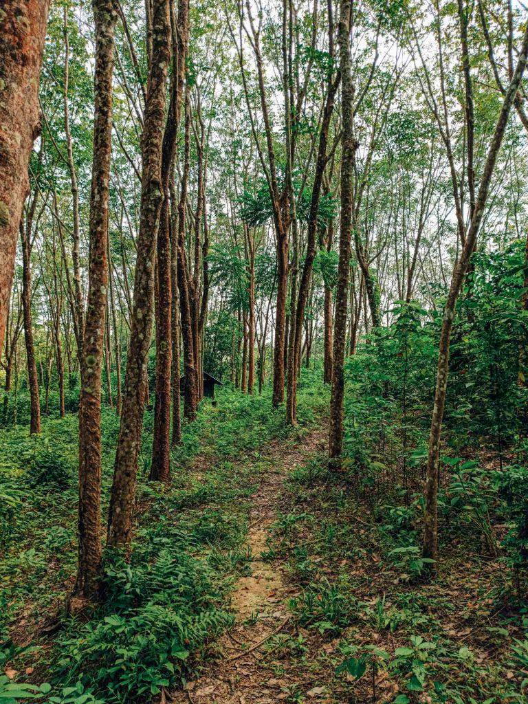 Camino por la selva a Ao Lo Dang Beach, Koh Mook