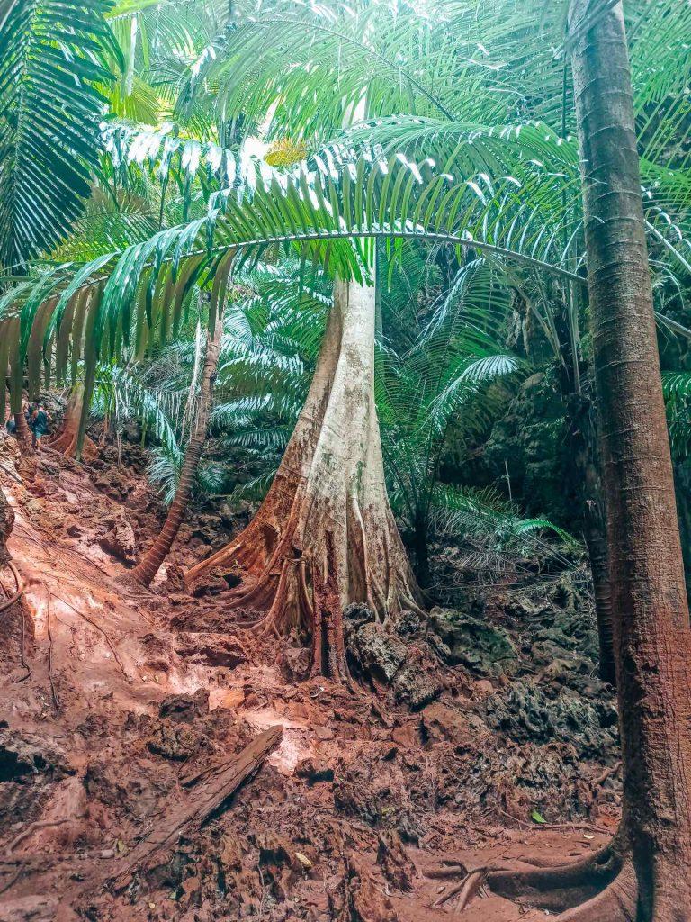 Camino al Railay View Point, un sitio imprescindible que ver en Railay, Krabi
