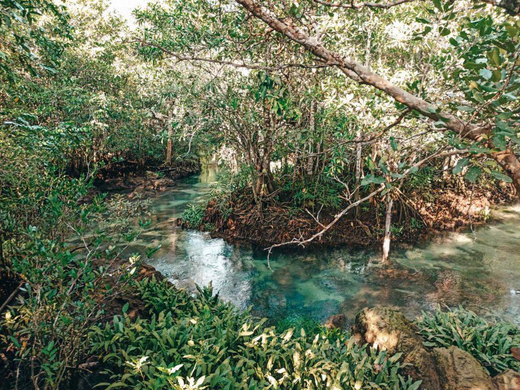 Tha Pom Klong Song Nam Nature Trail, un sendero precioso en Krabi