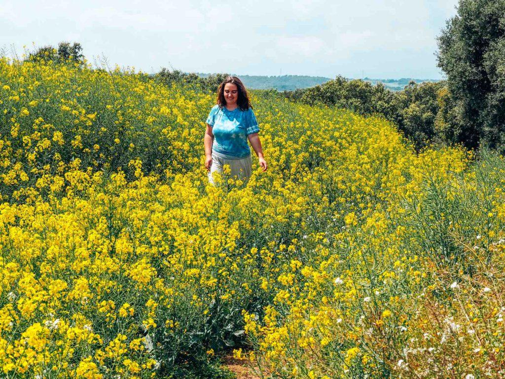 Campos de Colza entre Cardedeu y Llinars