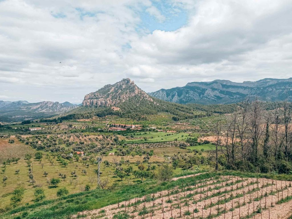 Vistas de la montaña Santa Bárbara desde la Olivera Lo Parot