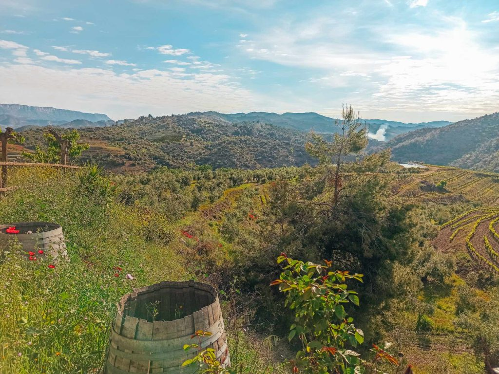 Viñedos de Tarragona