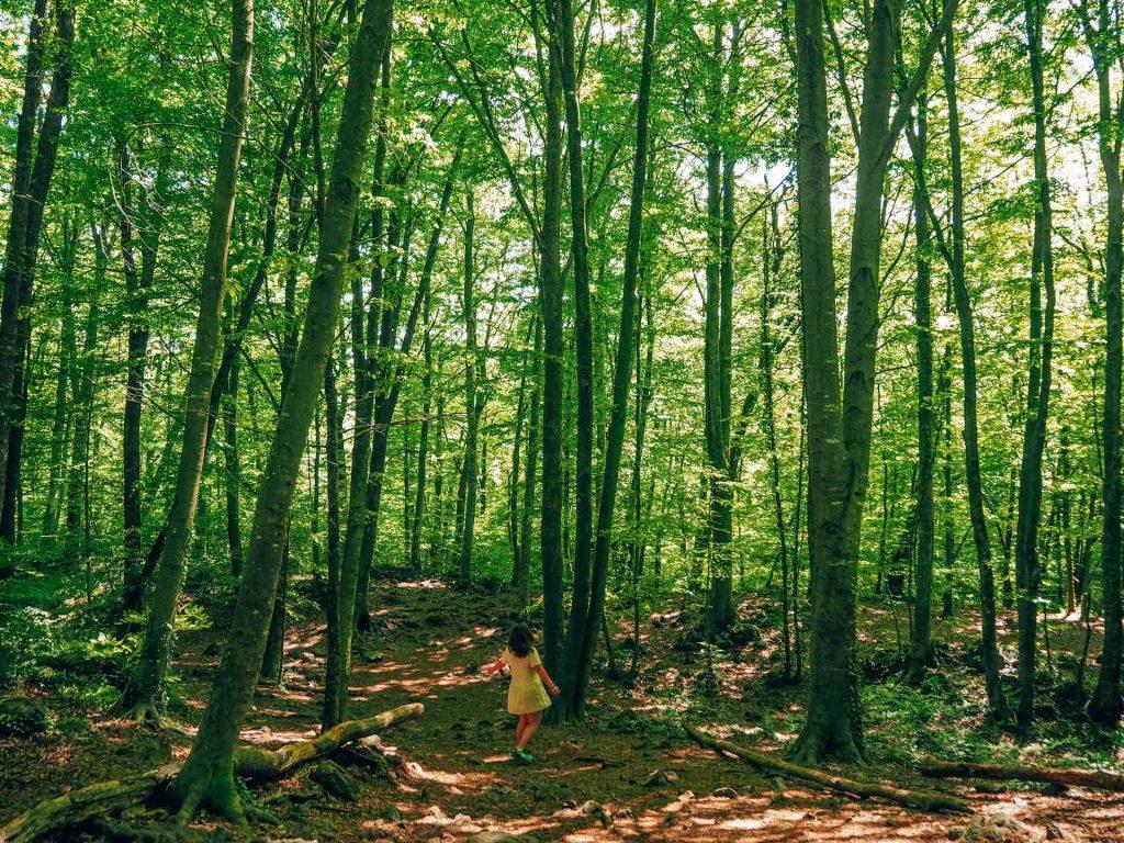 La Fageda d'en Jordà, el mejor bosque de Catalunya